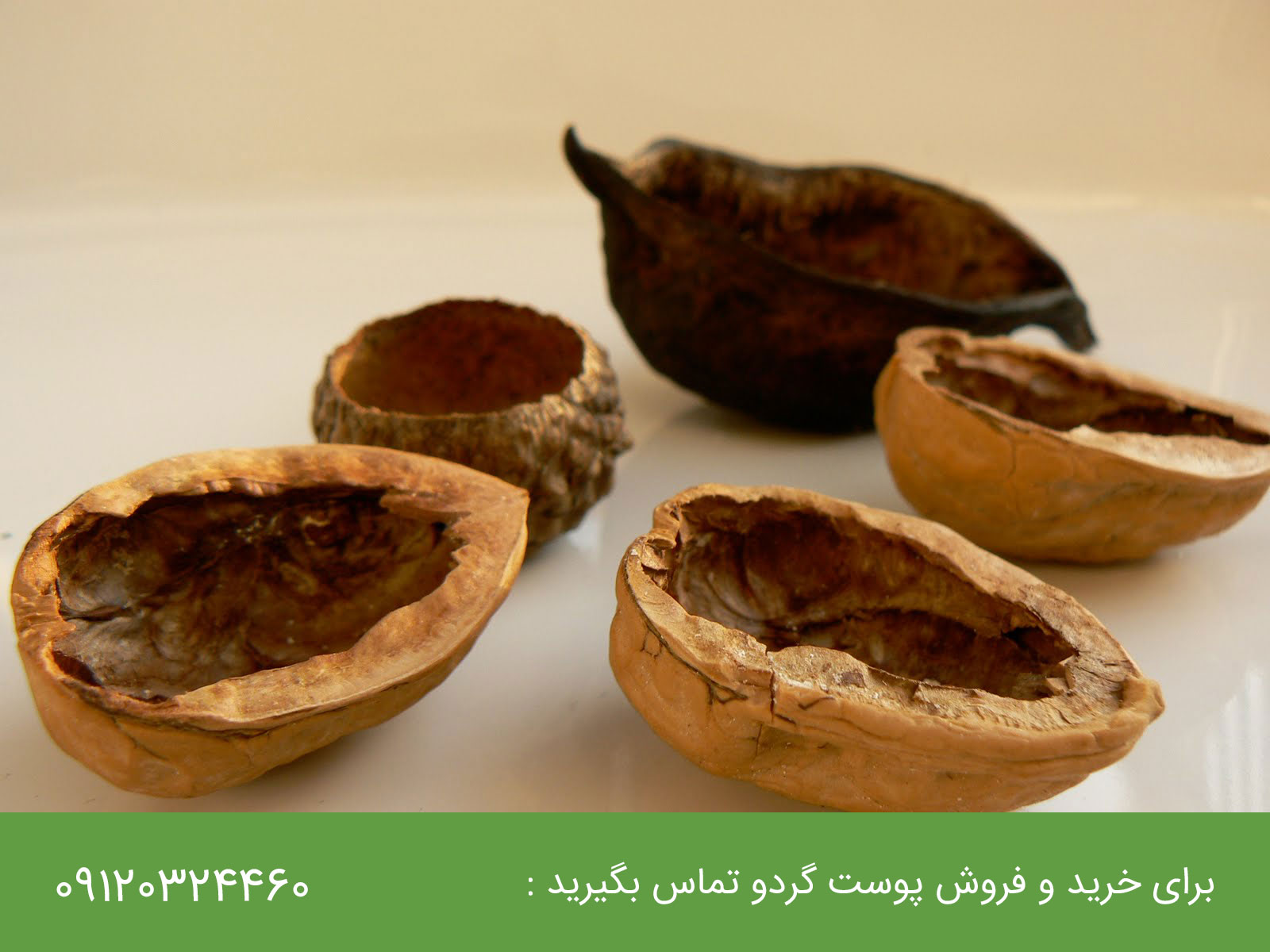 خواص پوست گردو : خاصیت پوست سبز گردو و پوست چوبی گردو
